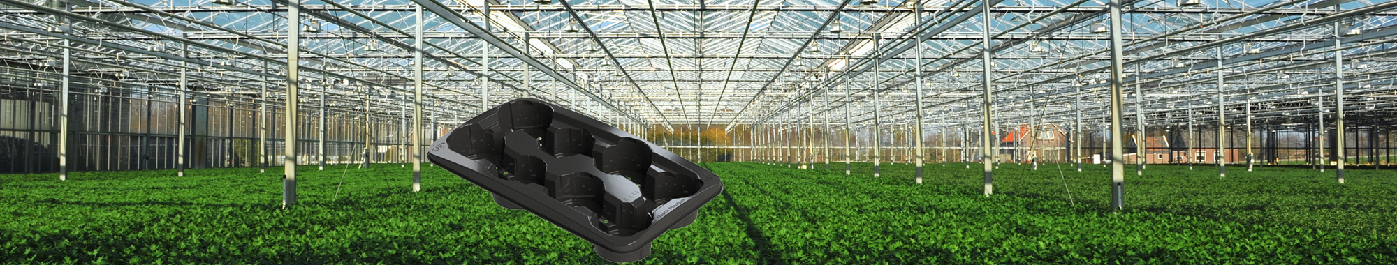 dexterMT-header-tuinbouw-plantentray-2000x380px
